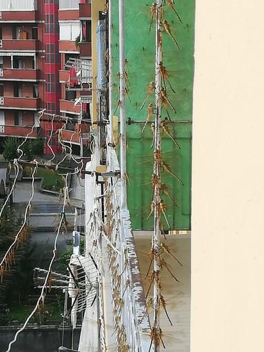 A Borgo San Paolo è di nuovo invasione di libellule: le segnalazioni rimbalzano sui social [FOTO]