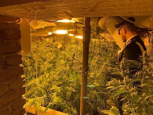 Torino, custode di elementare gestiva laboratorio di marijuana vicino alla scuola