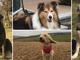 """""""Dona un sorriso con la dog therapy"""": For a Smile Onlus porta i cani in ospedale dai bimbi malati"""