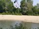 corso d'acqua con alberi e sabbia