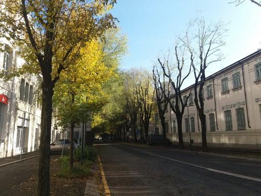 Iniziata la potatura degli olmi in corso Dante: ostruivano le finestre delle abitazioni