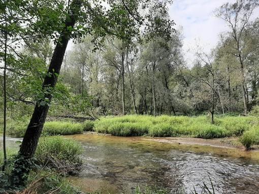 FCA e Regione Piemonte a favore dell'ambiente: un'area della Mandria diventerà parco sostenibile