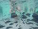 Zoom, novità dell'estate: a Malawi Beach si può fare il bagno con i piranha