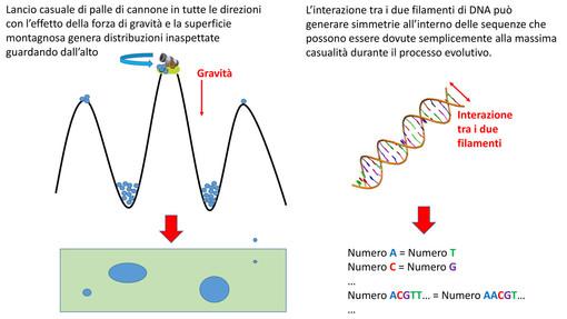 Una ricerca dell'Università degli Studi di Torino aiuta a svelare i segreti del DNA