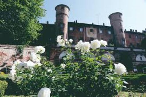 Rose al Castello e la rosa Principessa Maria Letizia al Castello di Moncalieri