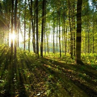 riforestazione collegno