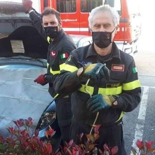 Si ritrova una biscia in auto: intervento dei vigili del fuoco a Vische