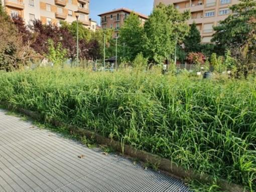 Torino, al via lo sfalcio del verde in Circoscrizione 4: precedenza a vie e corsi