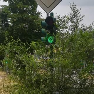 semaforo circondato da piante ed erba
