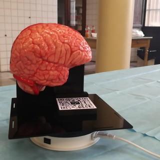 Simulatore neurochirurgia