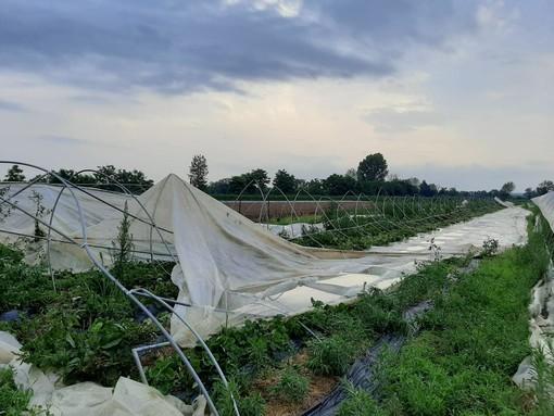 Temporale in Canavese: a Favria distrutti 2 mila metri quadri di serre