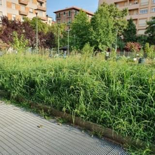 sfalcio dell'erba - foto di repertorio