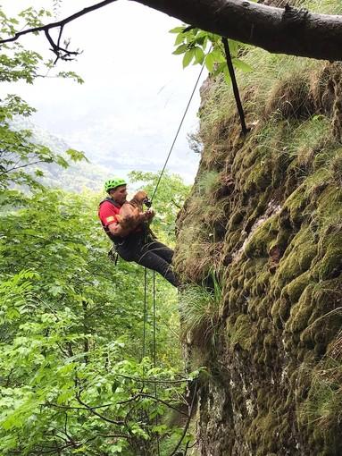 Quincinetto, i tecnici del Soccorso Alpino salvano tre cani da caccia rimasti intrappolati su una parete rocciosa