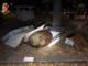 Scaricano i rifiuti nel parco Marino Ferraro, due persone denunciate