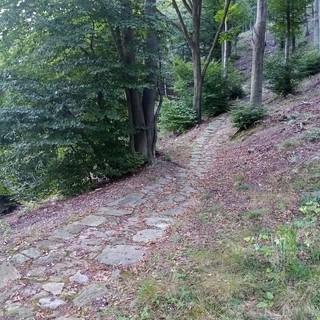 Un sentiero di montagna, tra i boschi di Vaie