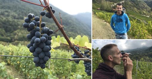 """La strada dei vigneti alpini fa tappa in Val Susa: """"Qui noi giovani viticoltori vogliamo ripopolare la montagna"""" [VIDEO e FOTO]"""
