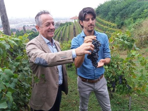 """Per la vigna di Villa della Regina sarà """"un'ottima annata"""": ecco l'uva miracolosa che sovrasta Torino [FOTO]"""