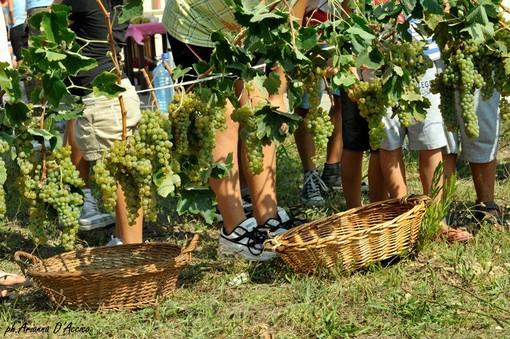 """Coronavirus, Coldiretti Piemonte:""""Perdite stimate dal 60% al 70% per il vino made in Piemonte"""""""