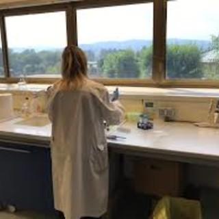 Coronavirus, l'Istituto Zooprofilattico avvia l'analisi dei tamponi